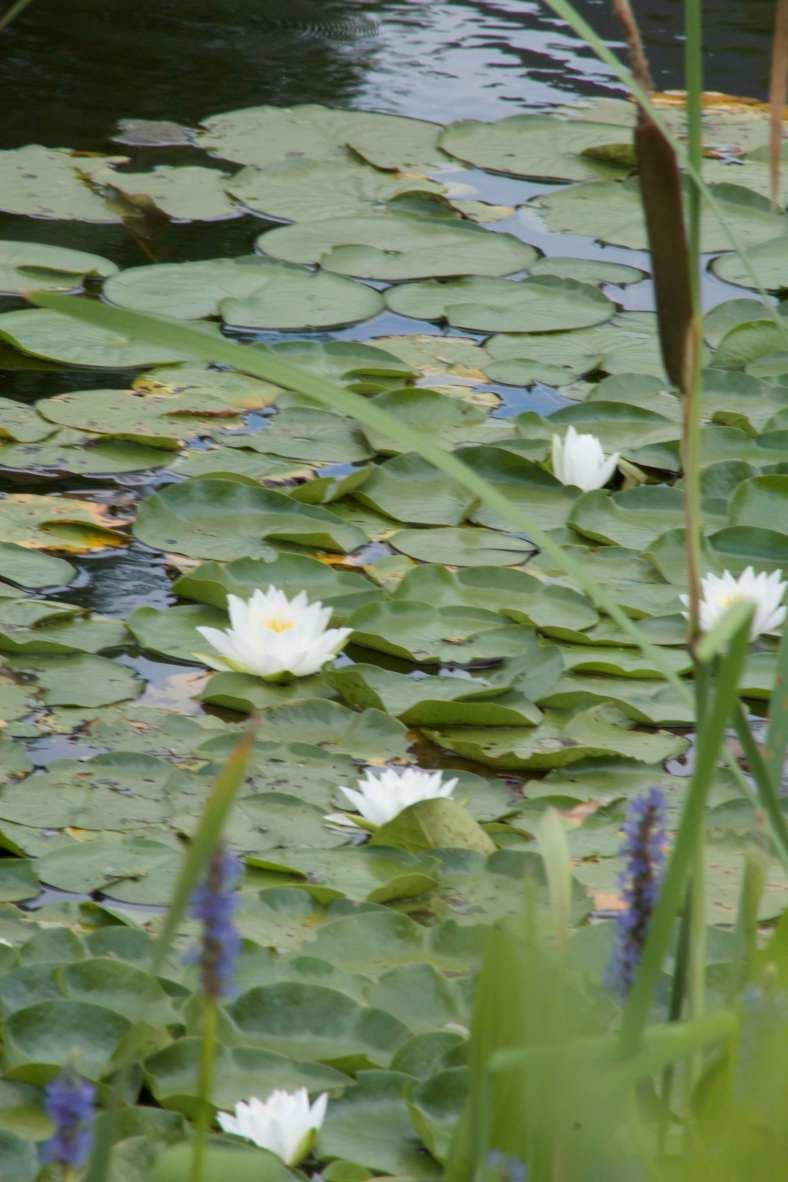 Bright_720-17_Monet Moment_IMG_1988