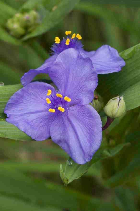 Bright_10-12-17_Double purple_IMG_0972