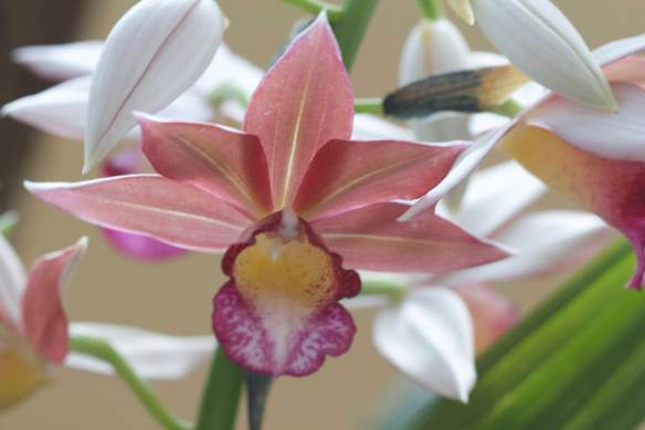 Bright_2019-02-01_Orchid_IMG_8899