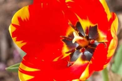 Bright | 2019-04-11_Tulip3_IMG_6241