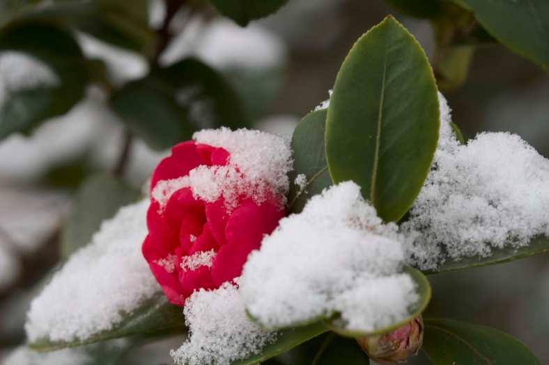 BRIGHT_6-27-19_Snow_IMG_8370